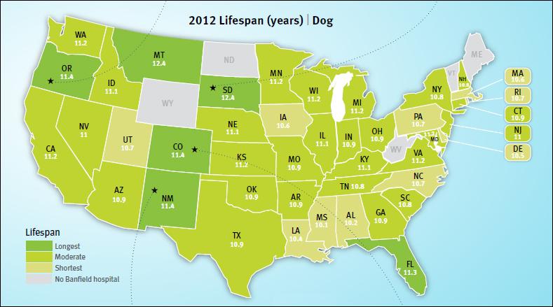dog lifespan