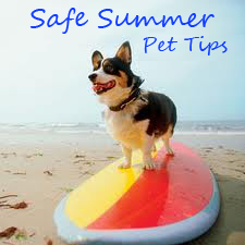 pet tips_summer