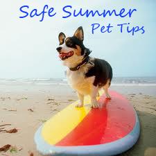 pet tips_summer