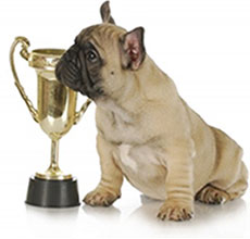 Is Your Dog a Top Dog?  Top 10 Dog Breeds Listed