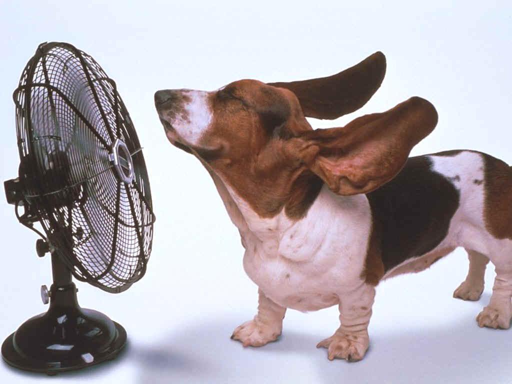 Pet Health News- Protect your pet