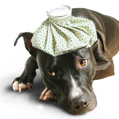 Pet Health- Decreasing weight means increasing concern