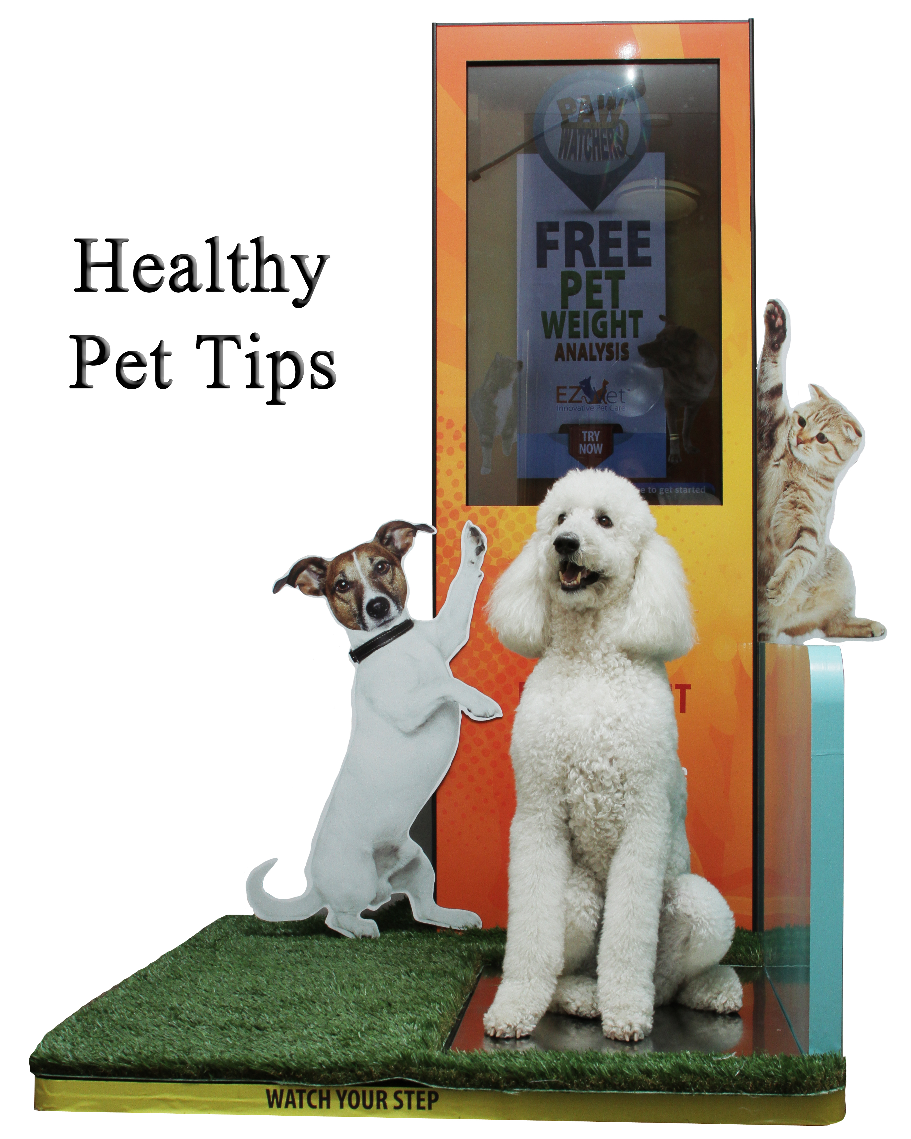 4 great tips to keep your pet healthy