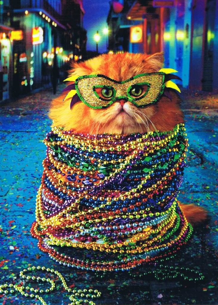 fat cat tuesday