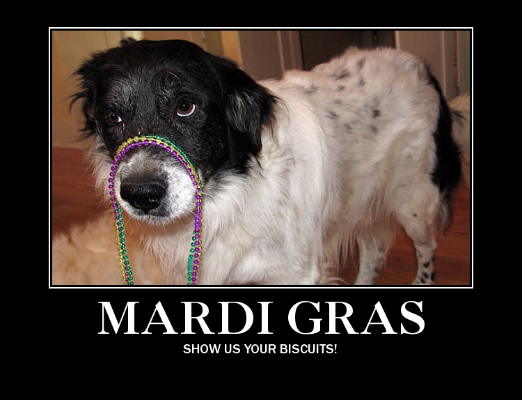 mardi-gras-dog