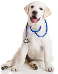 veterinarian miami