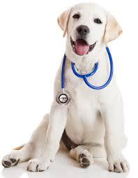 veterinarian miami